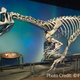Creating An Aurora For Antarctic Dinosaurs Using The X-Effects<sup>®</sup> LED Projector
