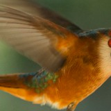 Simple Lighting Tips For Capturing <br>Amazing Wildlife Photography