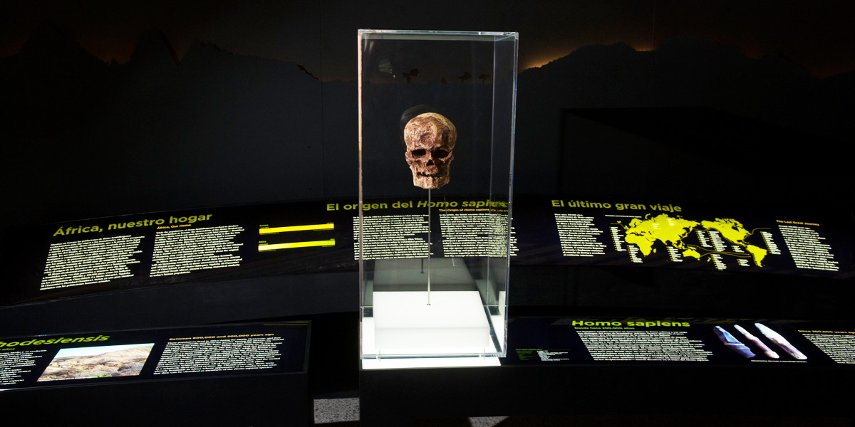 Rosco Custom LitePads backlight the graphics and provide up lighting for an ancient skull
